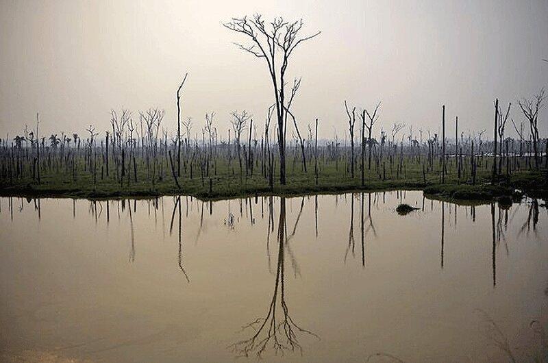 حریق در آمازون تهدیدی برای زیستگاه ماهی ها
