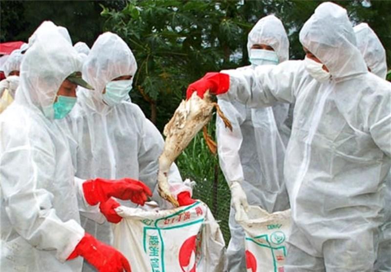 شیوع ویروس جدید آنفولانزای مرغی در مرکز چین