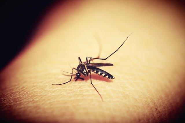 چین در راستا ریشه کن کردن مالاریا تا 2020