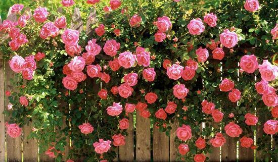 بوییدن کدام گل ها خاصیت درمانی دارد؟