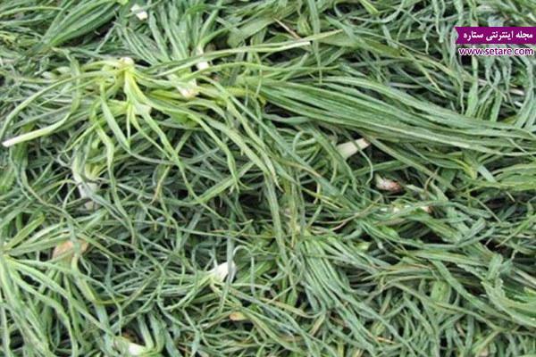 آشنایی با خواص گیاه شنگ (فواید درمانی شنگ)