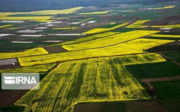 خبرنگاران فرماندار: سطح زیرکشت زمین های آبی در ایوان افزایش یافت