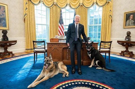 انتقال سگ های بایدن از کاخ سفید به دلیل پاچه گیری از ماموران امنیتی
